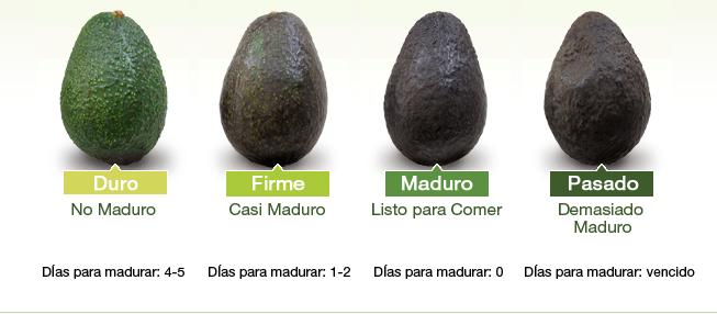 Etapas de maduración de la palta - Platos Argentinos